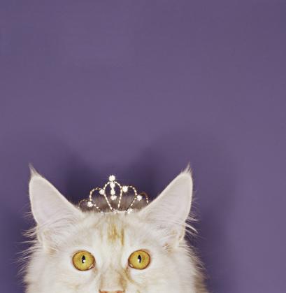 Crown - Headwear「Cat wearing tiara」:スマホ壁紙(7)