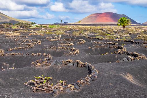 Volcano「Lanzarote, Canary Islands - La Geria, vineyards in winter」:スマホ壁紙(14)