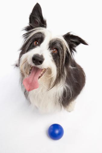 Happiness「Dog with ball」:スマホ壁紙(14)