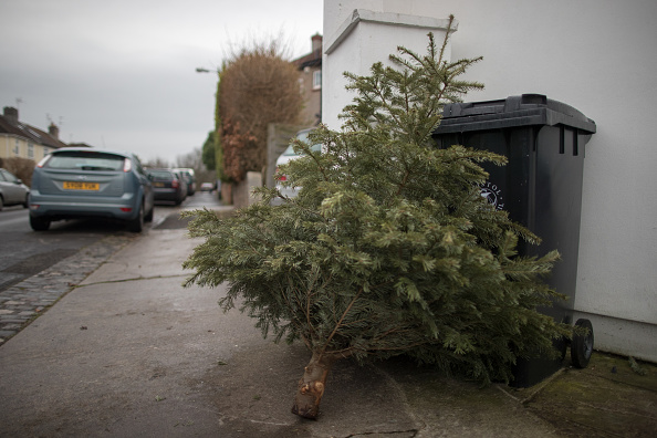 Tree「Christmas Rubbish And Recycling Causes Mounts Up」:写真・画像(3)[壁紙.com]
