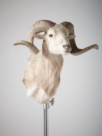 建築「Bust of Ram」:スマホ壁紙(15)