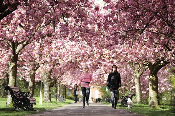 歩く「Blossom In Greenwich Park」:写真・画像(1)[壁紙.com]