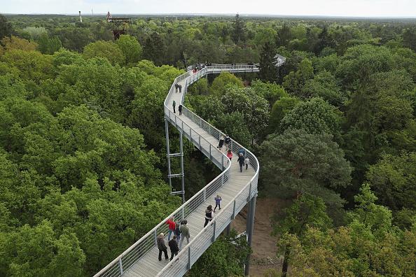 Beelitz「Elevated Treetop Path Leads Over Sanatorium Ruin」:写真・画像(18)[壁紙.com]
