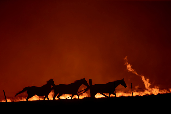 Horse「State Of Emergency Declared In ACT As Canberra Braces For Increased Bushfire Threat」:写真・画像(0)[壁紙.com]