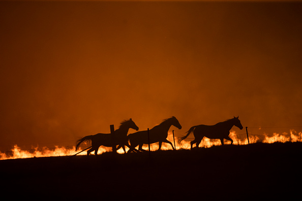 Horse「State Of Emergency Declared In ACT As Canberra Braces For Increased Bushfire Threat」:写真・画像(9)[壁紙.com]