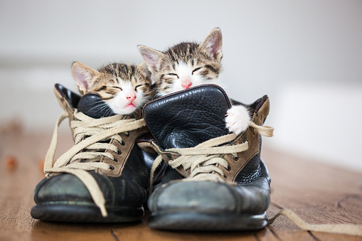 Cat「couple」:スマホ壁紙(7)