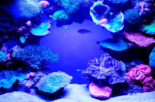 Coral - Cnidarian「Aquarium fish.」:スマホ壁紙(18)