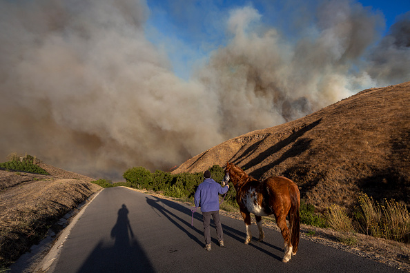 """Horse「""""Extreme"""" Santa Ana Winds Spark New Wildfires In Southern California」:写真・画像(11)[壁紙.com]"""