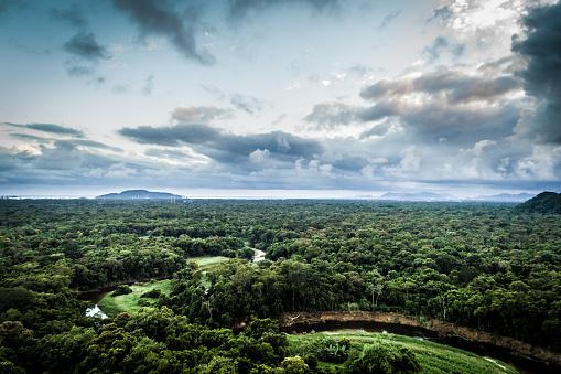 South America「Mata Atlantica - Atlantic Forest in Brazil」:スマホ壁紙(15)