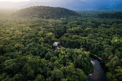 River「Mata Atlantica - Atlantic Forest in Brazil」:スマホ壁紙(8)