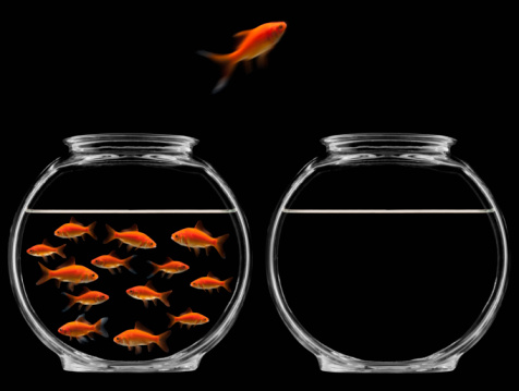 Mid-Air「Goldfish jumping out of bowl」:スマホ壁紙(12)