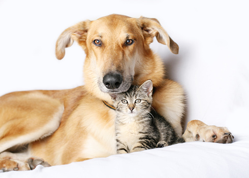 Pets「Dog and kitten snuggling together」:スマホ壁紙(14)