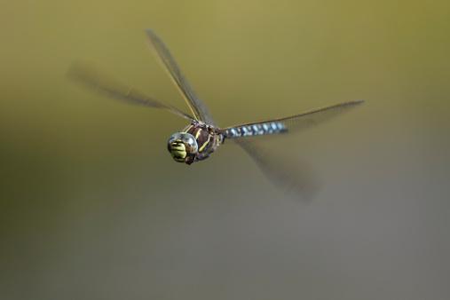Dragonfly「Germany, Murnau, Close up of male mooland hawker flying」:スマホ壁紙(18)