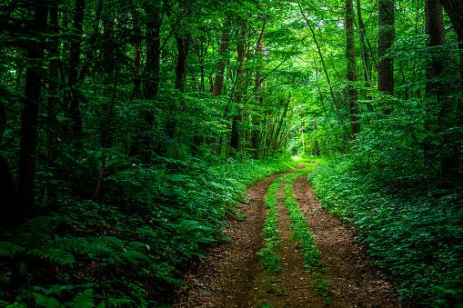 Footpath「Hiking trail in the forest」:スマホ壁紙(16)