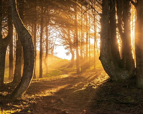 Sulking「Sun beams in bright and foggy Autumn Forest」:スマホ壁紙(11)