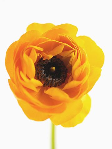 Single Flower「Close-up of a yellow flower」:スマホ壁紙(7)