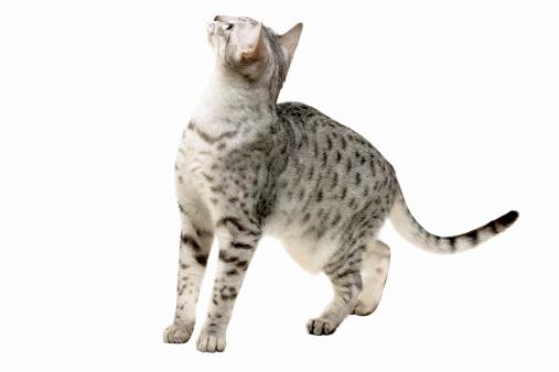 Mid-Air「Close-up of a cat」:スマホ壁紙(12)