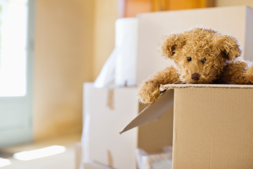 Moving House「Close-up of a soft toy in moving box」:スマホ壁紙(8)
