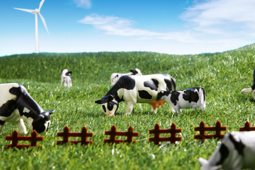 Cattle「Close-up of model of cows」:スマホ壁紙(18)