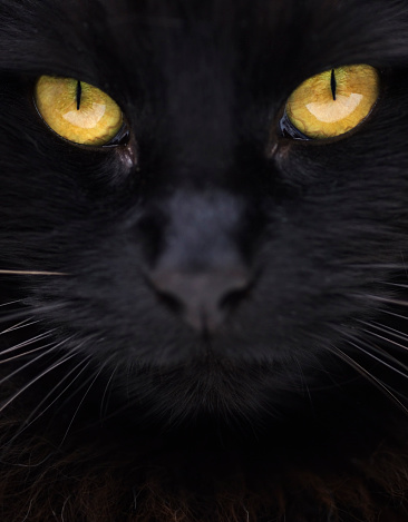 black cat「Close-up of black cat with yellow eyes」:スマホ壁紙(5)