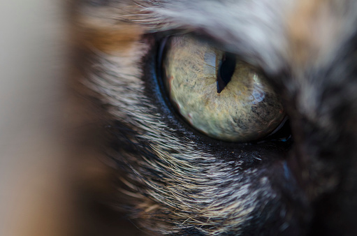 Animal Eye「Close-up of a cats eye」:スマホ壁紙(11)