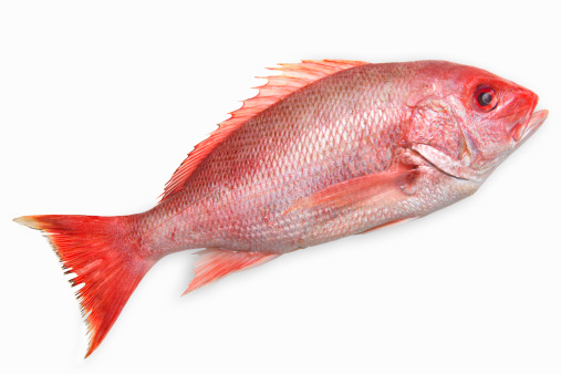 質感「Close-up of a snapper fish」:スマホ壁紙(18)