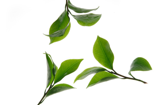 Digital Composite「Close-up of tea leaves」:スマホ壁紙(17)