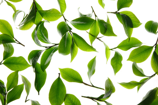Digital Composite「Close-up of tea leaves」:スマホ壁紙(1)