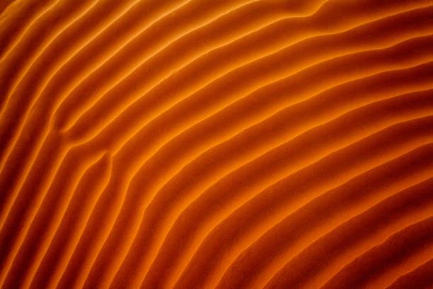 Close-up of ripples in the sand, Riyadh, Saudi Arabia:スマホ壁紙(壁紙.com)
