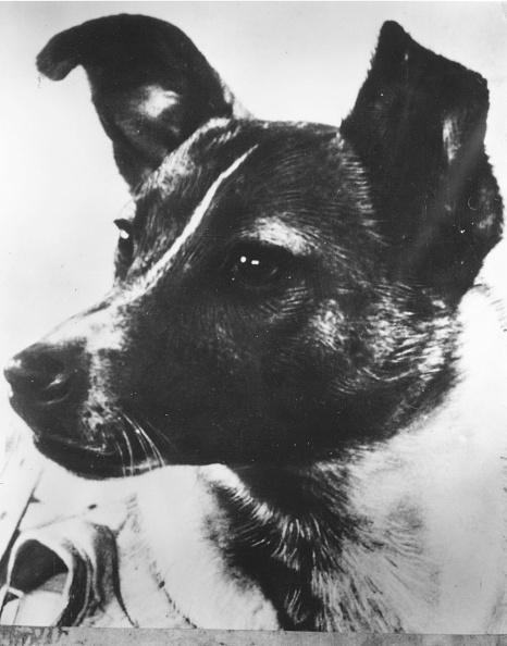 Outer Space「Sputnik Dog」:写真・画像(14)[壁紙.com]