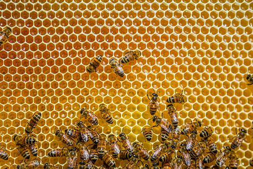 Rare「Close-up of honeybees sitting on honeycombs」:スマホ壁紙(0)