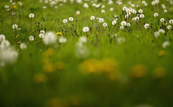 Grass「Global - Standalone Images」:写真・画像(7)[壁紙.com]
