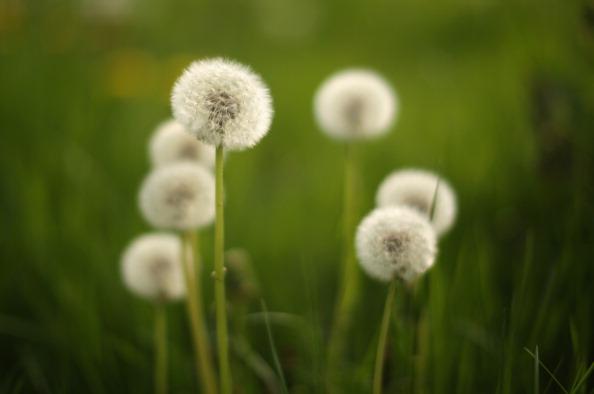 Grass「Global - Standalone Images」:写真・画像(3)[壁紙.com]