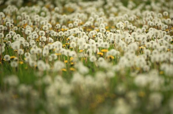 Grass「Global - Standalone Images」:写真・画像(8)[壁紙.com]