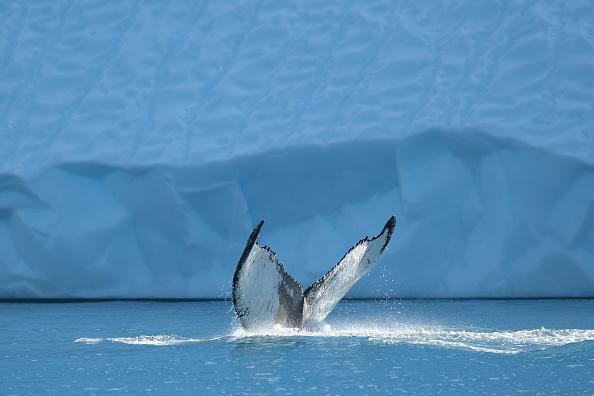Animal「Western Greenland Hit By Unseasonably Warm Weather」:写真・画像(7)[壁紙.com]