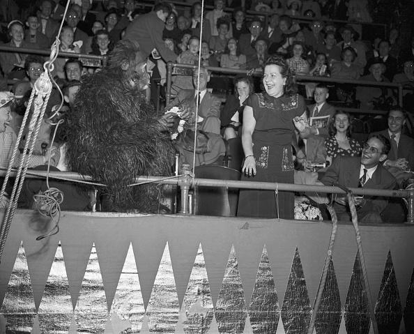 Circus Tent「Person Dressed In Gorilla Suit」:写真・画像(11)[壁紙.com]