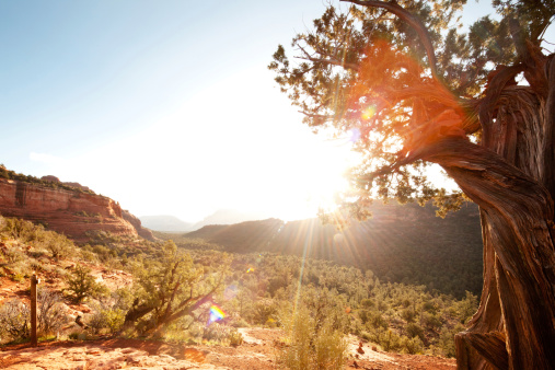 Sedona「Landscape scene of red rock mountains and desert with sunlight」:スマホ壁紙(2)