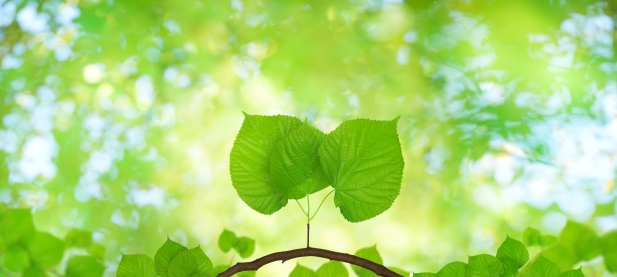 Beginnings「Spring Foliage」:スマホ壁紙(1)
