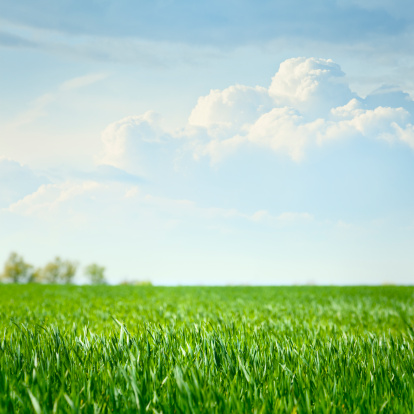 Grass Area「Idyllic grassland」:スマホ壁紙(18)