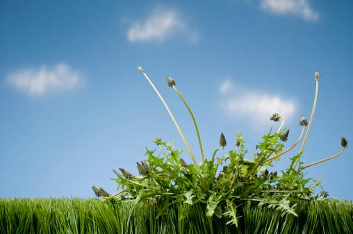 Planting「Weeds Growing In Grass」:スマホ壁紙(17)