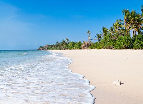 Tropical Tree「African Beach」:スマホ壁紙(6)