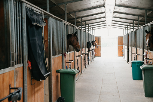 Dressage「Horse stalls in a horse riding school」:スマホ壁紙(10)