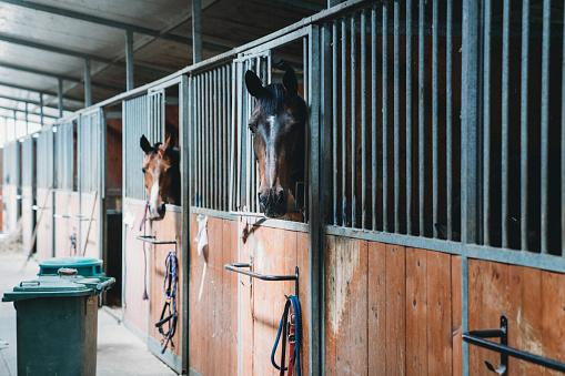 Dressage「Horse stalls in a horse riding school」:スマホ壁紙(19)