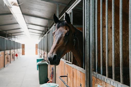 Dressage「Horse stalls in a horse riding school」:スマホ壁紙(7)