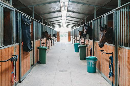 Dressage「Horse stalls in a horse riding school」:スマホ壁紙(18)