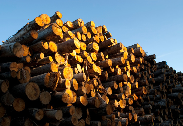 Log「Timber Logs In France」:写真・画像(9)[壁紙.com]