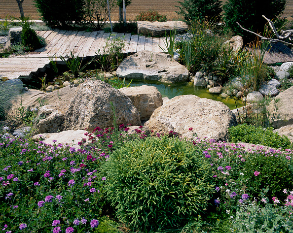 Grass「View of shrubs and stones near water」:写真・画像(6)[壁紙.com]