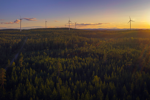 Boreal Forest「Wind power stations in a forest landscape」:スマホ壁紙(7)