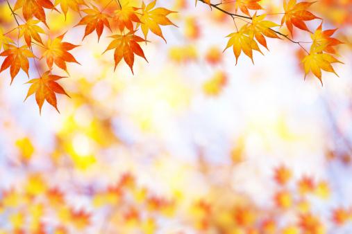 かえでの葉「秋のフレーム」:スマホ壁紙(6)