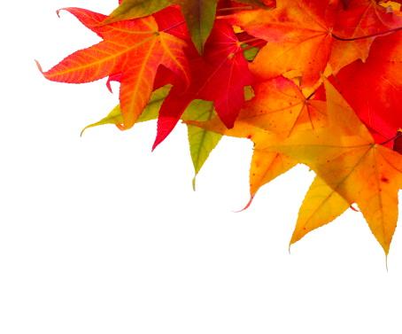 かえでの葉「秋のフレーム」:スマホ壁紙(11)